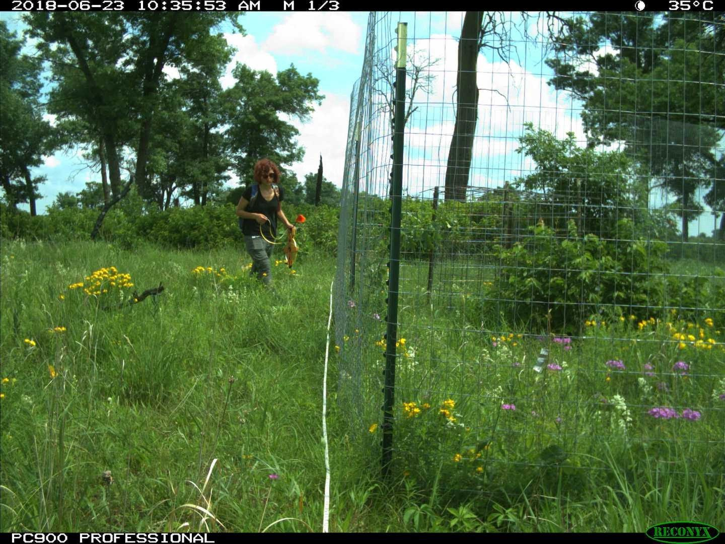 Dr. Meredith Palmer, captured in a human bycatch from a camera trap set in Wisconsin. Image: Dr. Meredith Palmer