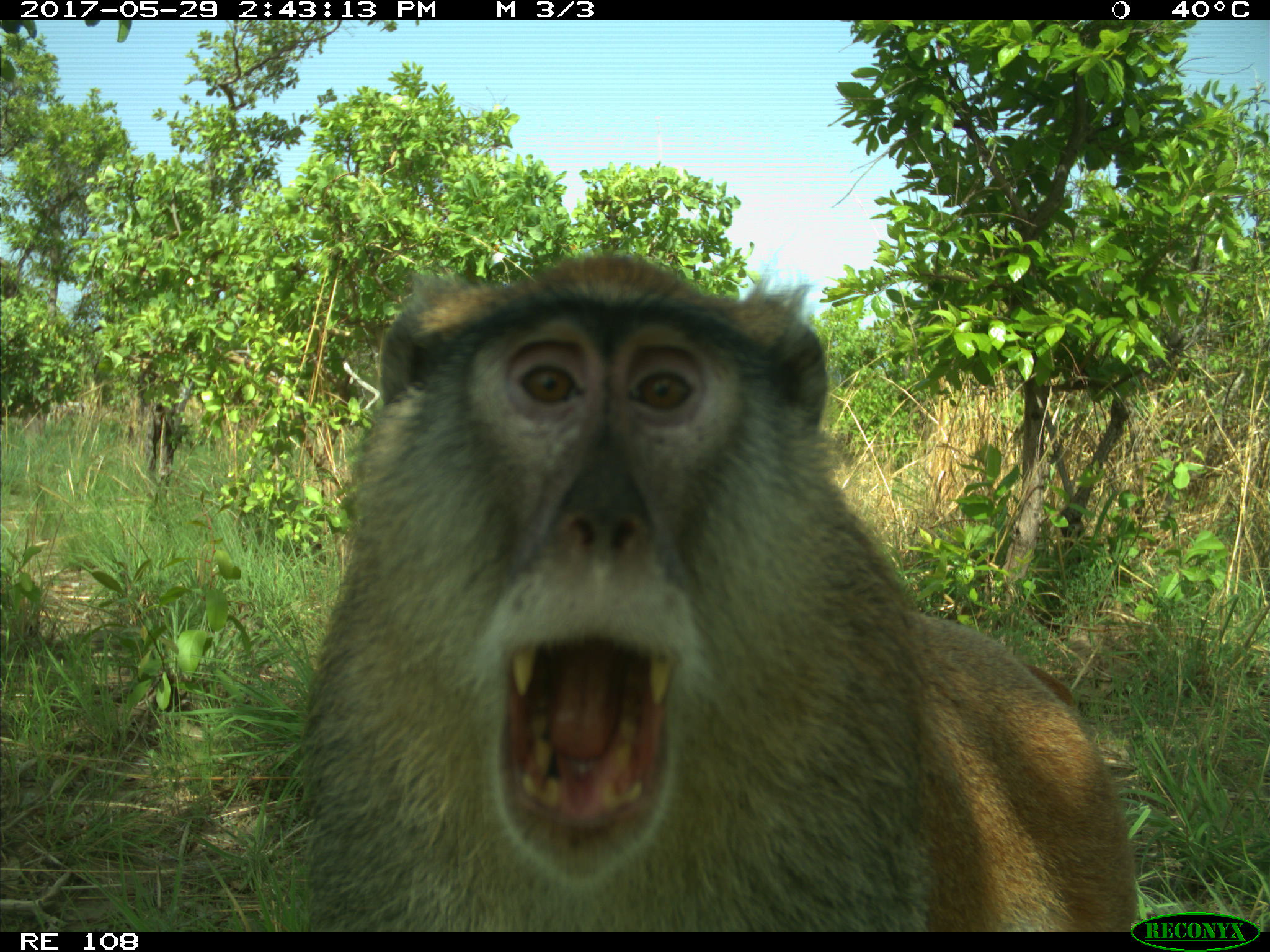"Camera traps are remotely triggered when they detect movement and body heat. Many camera traps are originally conceived to survey wildlife, but inadvertently end up capturing ""human bycatch"" in their images. Images: Dr. Nyeema C. Harris/University of Michigan."