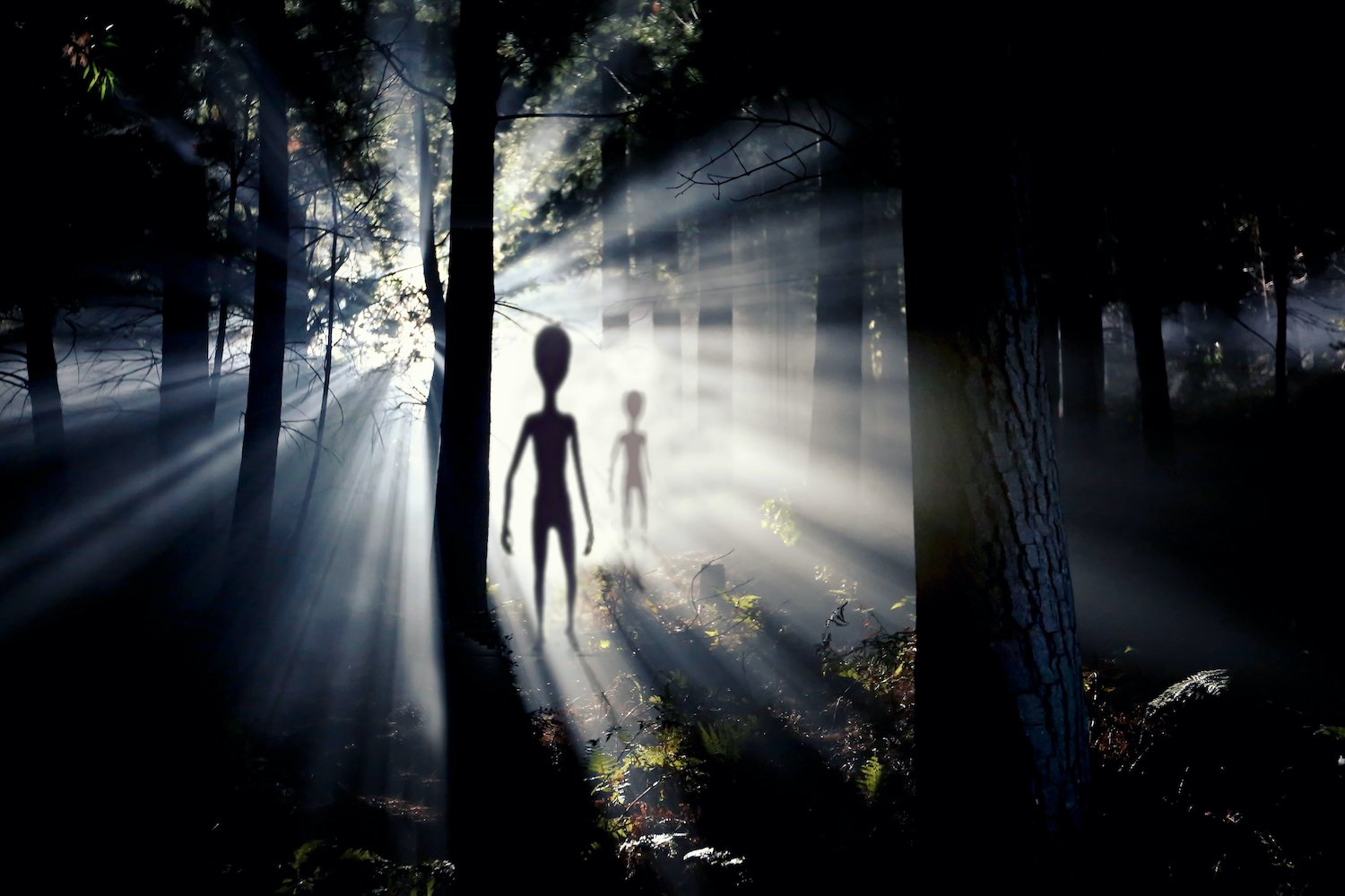 Could Invisible Aliens Really Exist Among Us? An Astrobiologist Explains